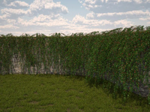Cotoneaster dammeri for retaining walls